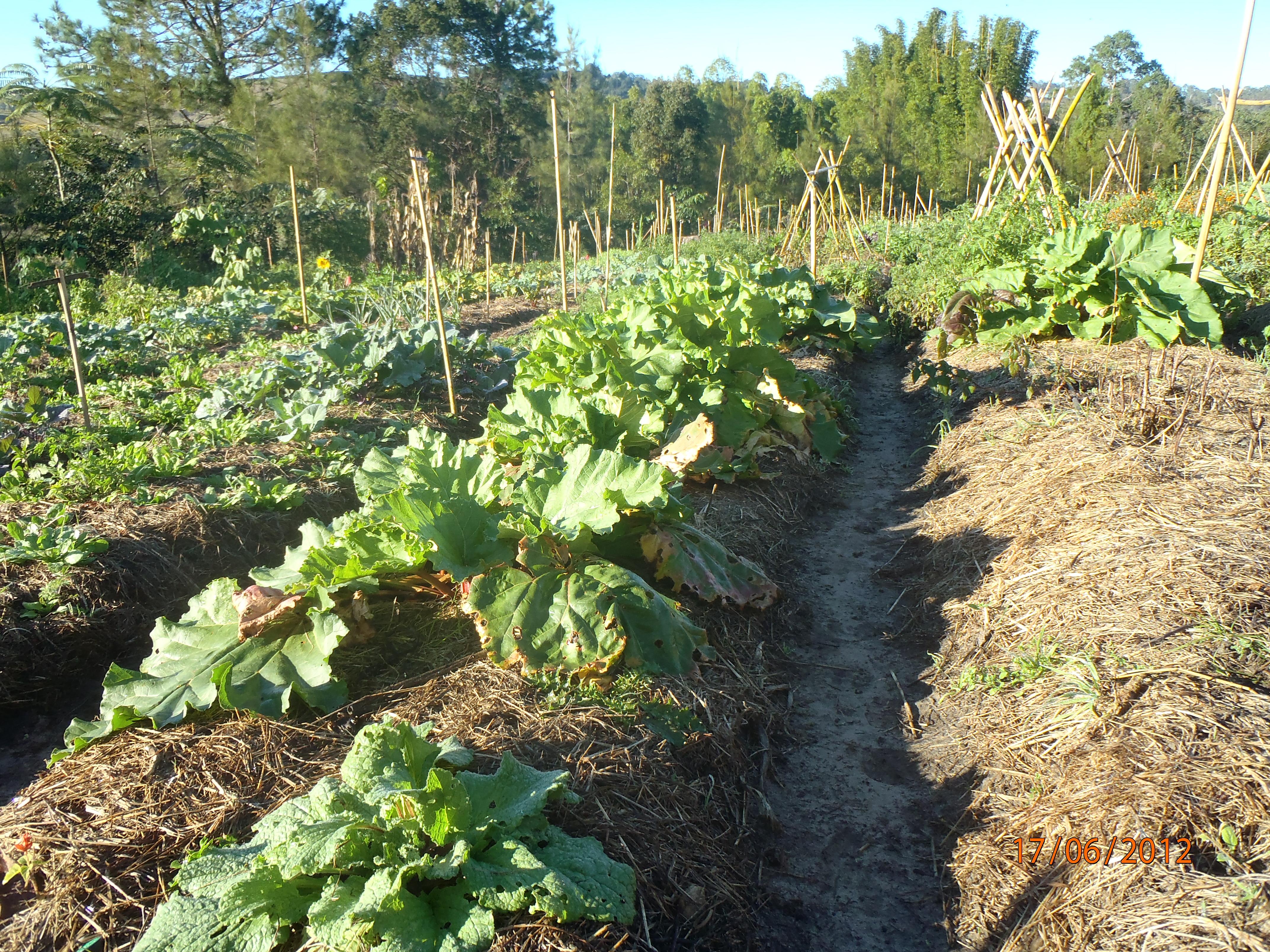 jardin en permaculture quelques techniques
