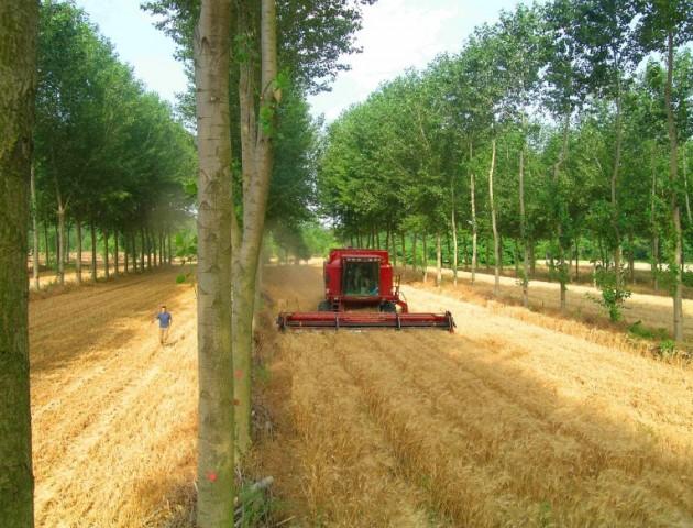 Agroforesterie vézenobre