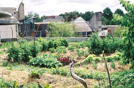 jardiner sur les toits