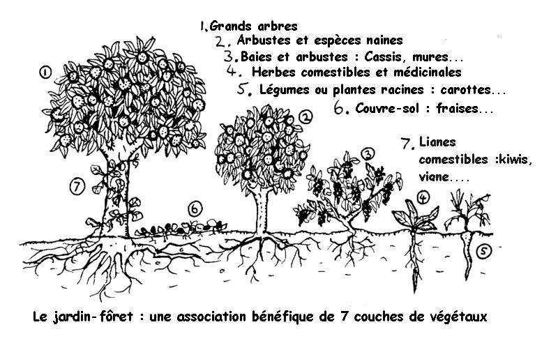 forêt nourricière
