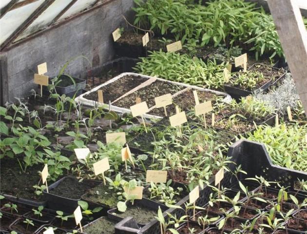 permaculture-semis-sous-abris