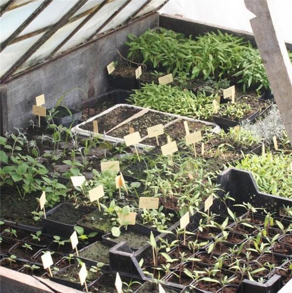 Pr parer son potager la sortie de l 39 hiver for Organiser son jardin potager