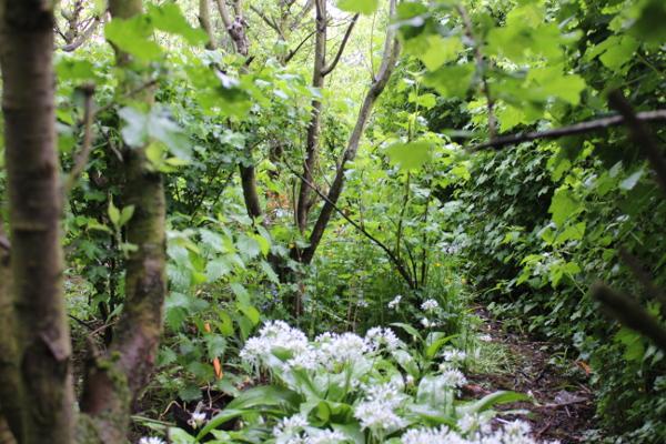 Jardin-forêt-mouscron