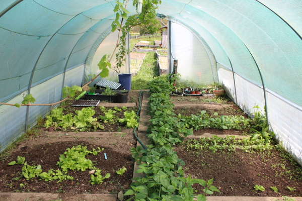 ferme-permaculture-3