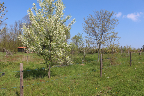 ferme-permaculture-4