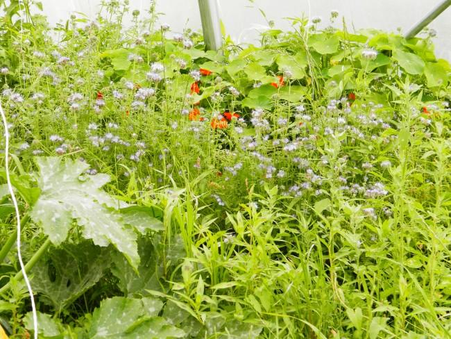 Formation permaculture Saverdun 2