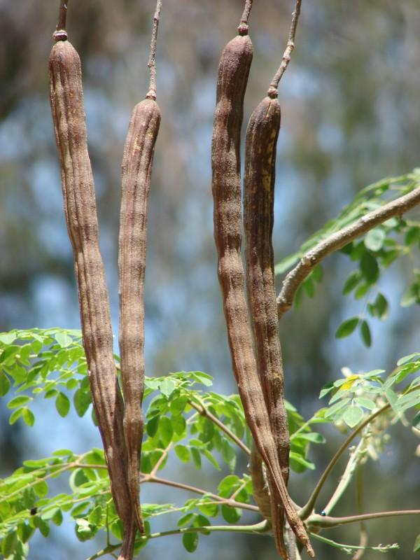 Permaculture aride, semi-aride, tropicale-3