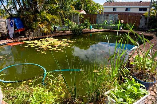Une piscine recyclé en aquaculture