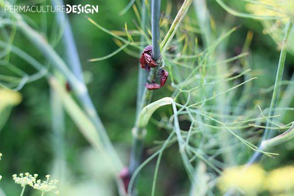 Insectes sur plante dans jardin permaculture