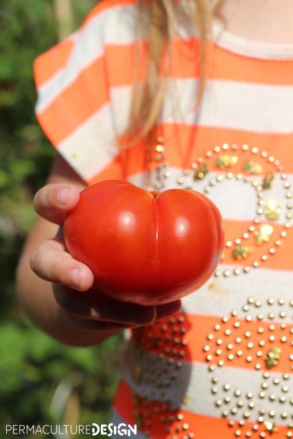 Enfant partageant sa tomate dans jardin permaculture