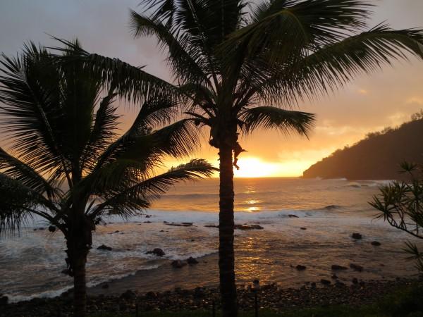 Au delà de la carte postale, le cocotier est une plante d'une grande utilité pour pratiquer la permaculture en milieu tropical.