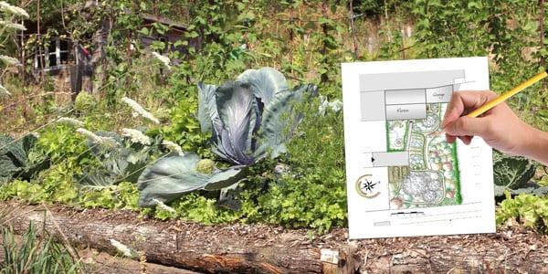 Le jardin potager en permaculture de la goursaline ao t 2015 for Jardin permaculture 2015