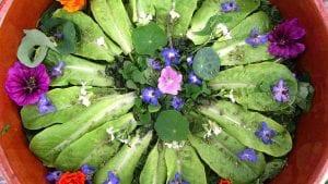 Salade de plantes sauvages comestibles