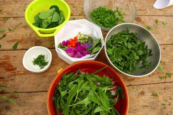 Récolte de plantes sauvages comestibles triée