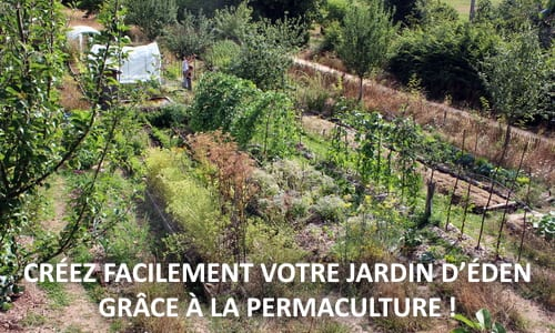 comment faire un jardin en permaculture. Black Bedroom Furniture Sets. Home Design Ideas
