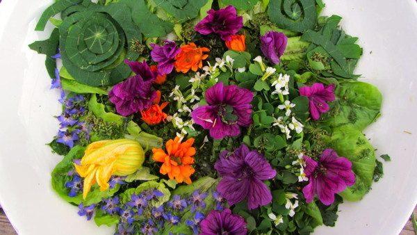 Découvrez une formation vidéo sur les plantes sauvages comestibles et médicinales avec beaucoup de recettes pour les connaître et les utiliser au quotidien
