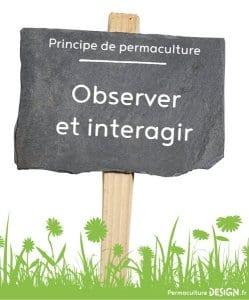 Principe-de-permaculture_Observer-et-interagir
