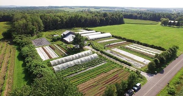 Une micro ferme en mara chage bio productive et rentable for Permaculture bretagne