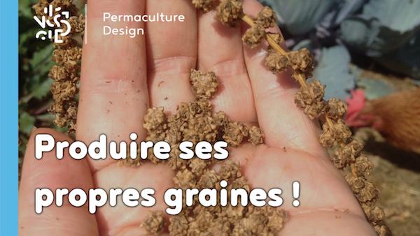 Apprendre à produire ses propres graines pour être plus autonome !