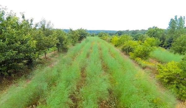 regeneration-agriculture-agroforesterie-mark-shepard-permaculture-design-08_600px