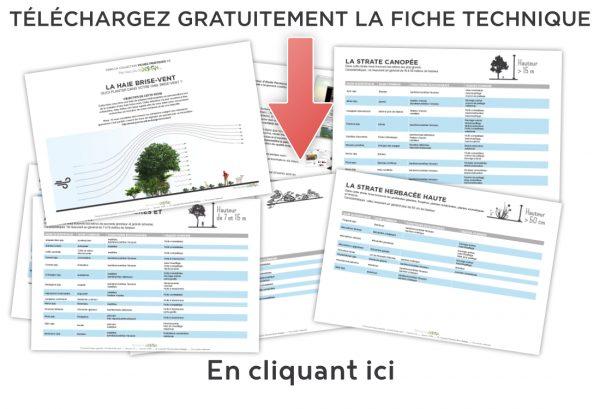 ft004_illus_contenu-de-la-fiche-telechargement-direct