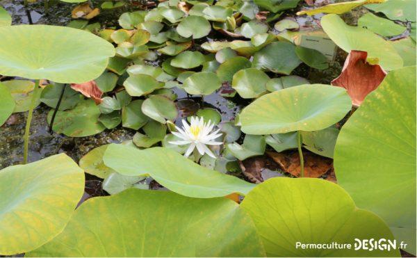 Pratiquer une bonne gestion de sa ressource en eau est primordialen permaculture !