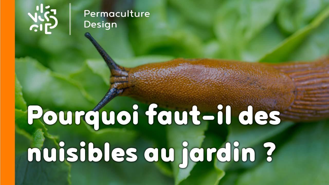 Pourquoi faut il des nuisibles au jardin - Insectes nuisibles du jardin ...
