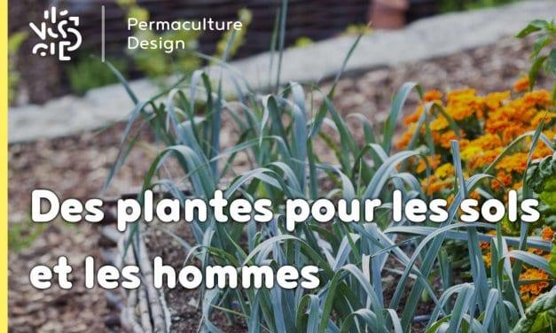 Les plantes sauvages au service de la santé des sols et des hommes!