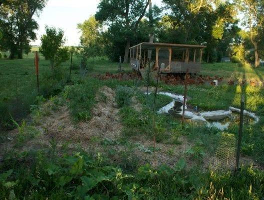 potager, permaculture, vivaces