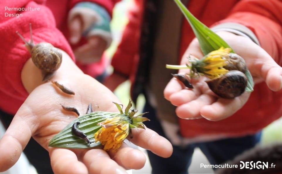 montessori-ecole-enseigner-permaculture-design-02
