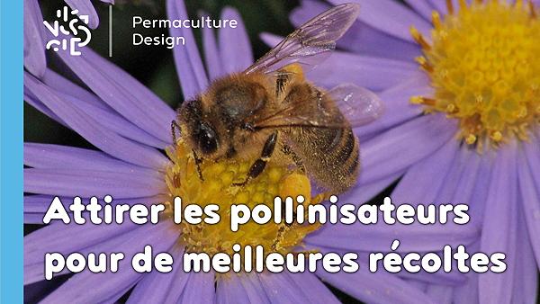 abeilles-pollinisateurs-recoltes-permaculture-design_01_600