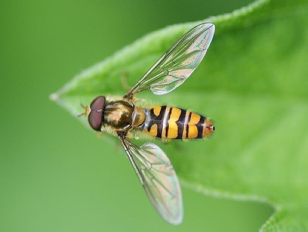 En plantant des végétaux offrant le gîte et le couvert aux insectes pollinisateurs, vous augmenterez et protégerez vos récoltes.