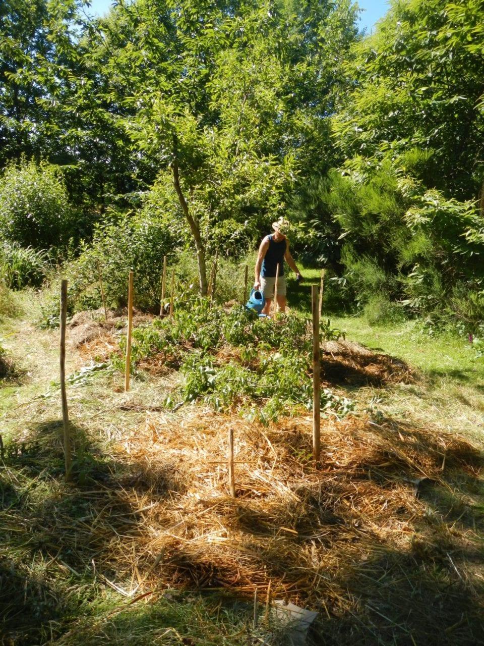 cours-certifie-de-design-en-permaculture-84h-28-