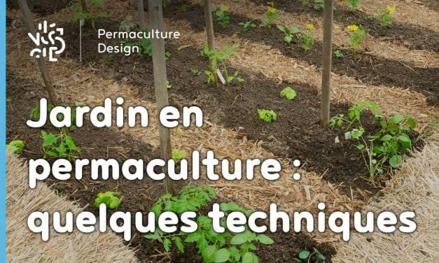Jardin en permaculture : quelques techniques…