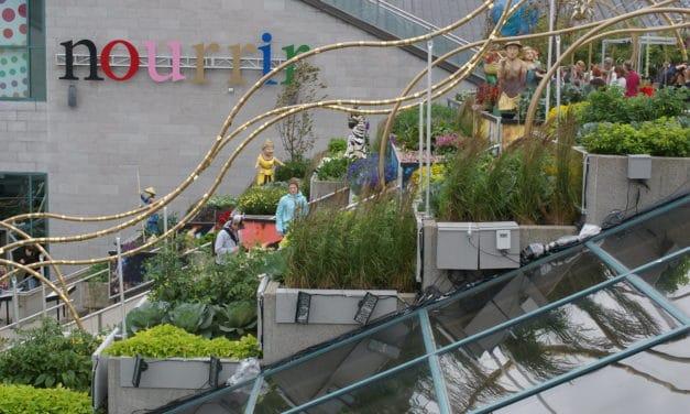 Jardiner sur les toits : la vidéo et le guide