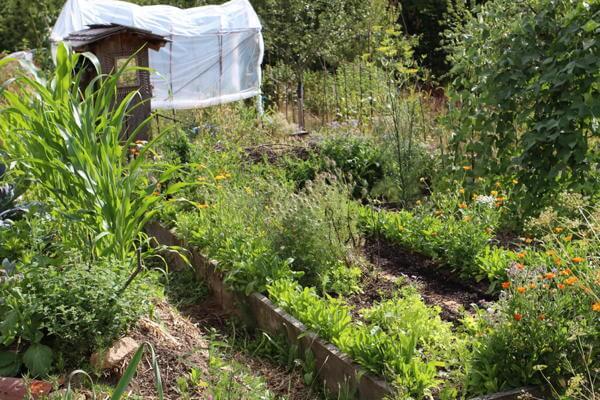 Comprendre l int r t d une conception en permaculture for Permaculture rendement