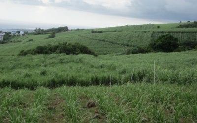 Permaculture tropicale : les sols agricoles pauvres en milieux tropicaux