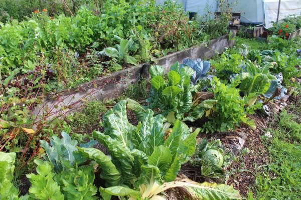 jardinage potager buttes diversifiée