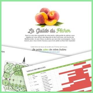 Les guildes autour des arbres fruitiers : la guilde du pêcher