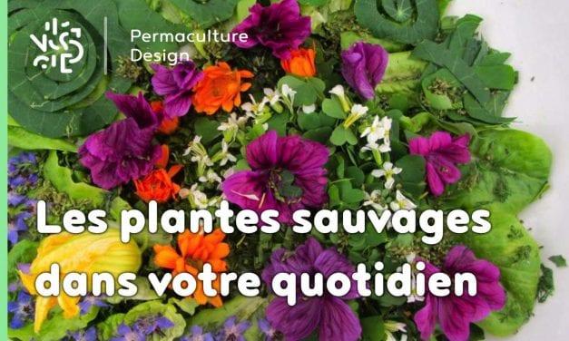Faites entrer les plantes sauvages dans votre quotidien!