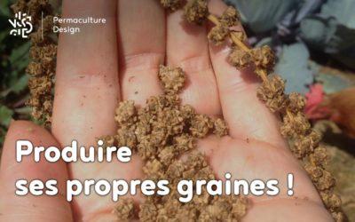 Pourquoi et comment produire ses propres graines?