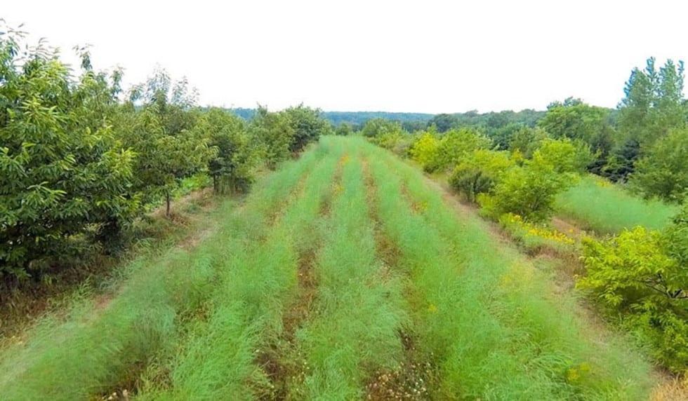 La ferme « New Forest Farm » dans le Wisconsin de Mark Shepard