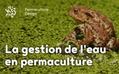 La gestion de l'eau en permaculture