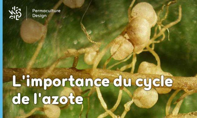 L'importance du cycle de l'azote en permaculture