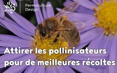 Obtenez de meilleures récoltes en attirant les pollinisateurs !
