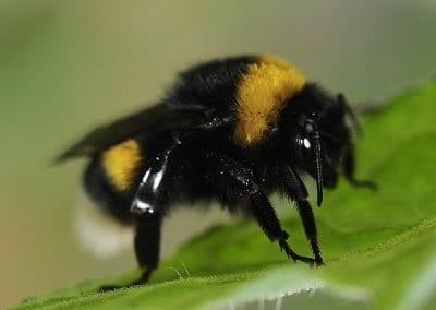 abeilles-pollinisateurs-recoltes-permaculture-design_04