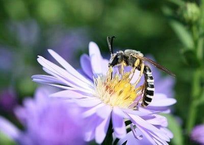 abeilles-pollinisateurs-recoltes-permaculture-design_05