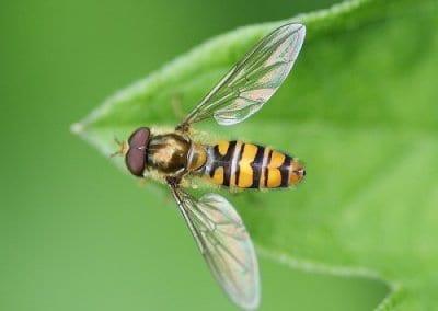abeilles-pollinisateurs-recoltes-permaculture-design_07
