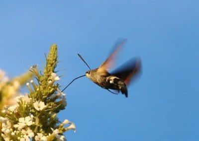 abeilles-pollinisateurs-recoltes-permaculture-design_10