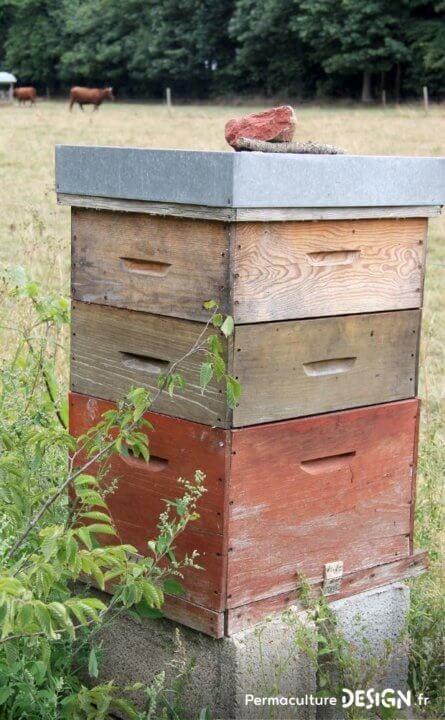 L'apiculture naturelle et ses bienfaits pour agir contre le déclin des populations d'abeilles.
